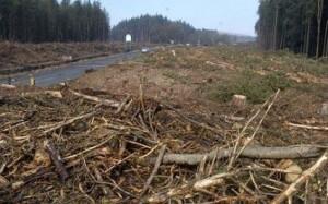 6000 trees