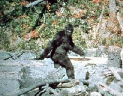 Sasquatch spotted in north carolina woods for Patterson woods