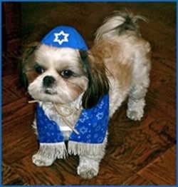 jewish-dog