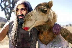 pakistan-camel-sex-google