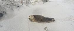HT_Seal_Beach_ER_160219_12x5_1600