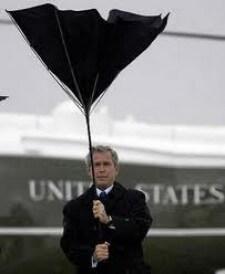 bush-umbrella