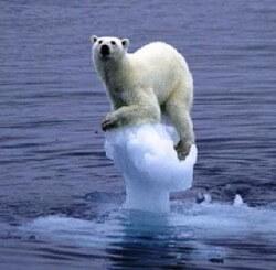 polar-bear-global-warming